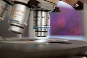 Principios del Camino un microscopio Obras