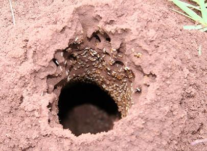 Las termitas hacer Sting? - Cusiritati.com