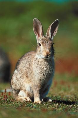 Cómo conservar las pieles de conejo