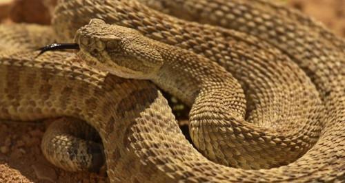 Las serpientes en Denver, Colorado