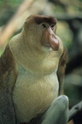 MONO (Caractersticas, Tipos de Monos. - t) 43