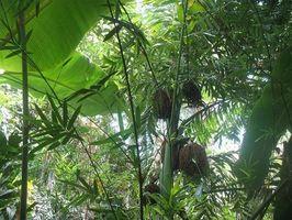 Razones para Salvar la selva tropical