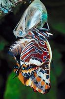 ¿Qué hacen las mariposas y las rocas metamórficas tienen en común?
