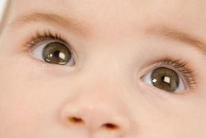 Cómo calcular la probabilidad de Color de los ojos de un bebé