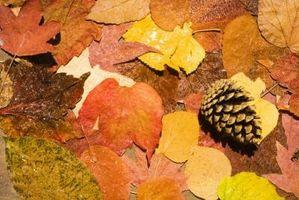 Acción de gracias de artesanía elaborados con las hojas y conos del pino para los niños