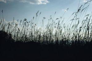 Los factores bióticos en el prado Bioma