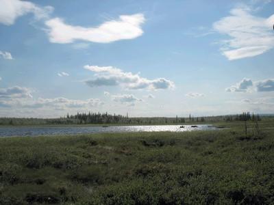 ¿Por qué es la tundra importantes para el ecosistema?