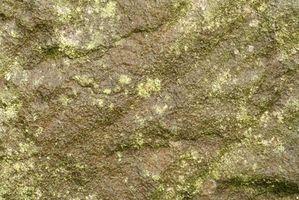 Características estructurales de Algas