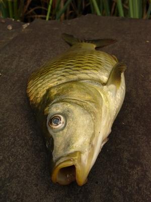 ¿Cómo deshacerse de la carpa en un embalse de 40 acre sin hacer daño a los peces juego