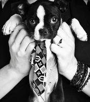 Juegos de vestir para perros