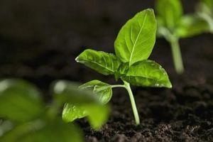 Los temas de Genética Vegetal