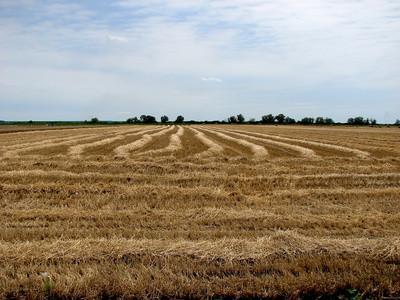 ¿Por qué las lombrices de tierra necesitan un ambiente húmedo?