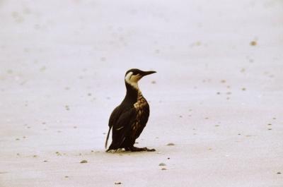 Peligros para el bioma marino