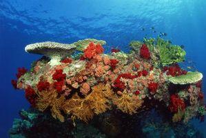Las adaptaciones de las plantas necesarias para vivir en el Coral Reef