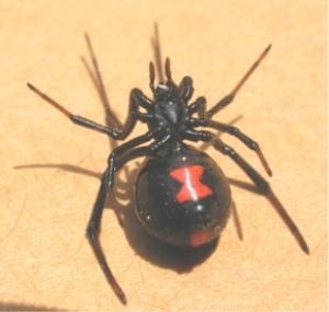Cómo identificar las arañas en Utah