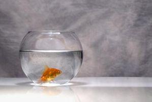 ¿Cómo funciona el color de la luz afectan a los peces?