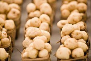 Similitudes y diferencias entre los hongos y Monera