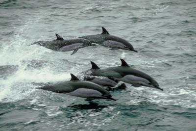 ¿Cómo afectan los Nets Delfines