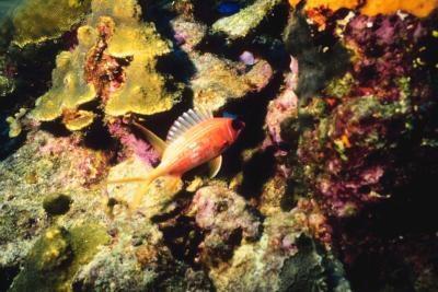 Propiedades importantes de Coral