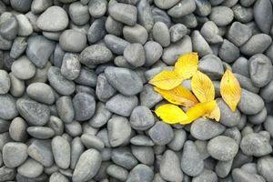 Ideas fáciles para la pintura en las rocas