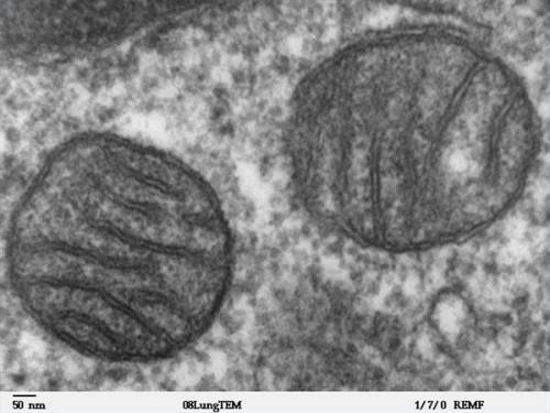 Cómo identificar las estructuras celulares