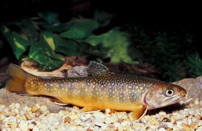 Cómo hacer Fish Obtener el oxígeno del agua?