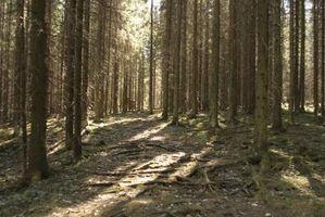 Cómo un factor biótico de la Selva Usos Uno de los factores abióticos