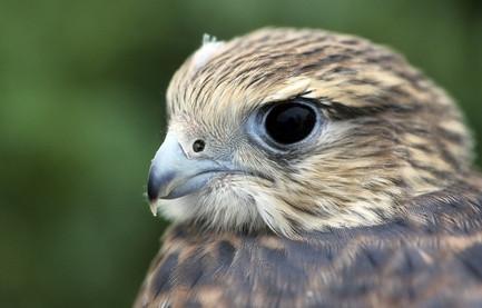 Identificación Fern Hill Bird Humedales