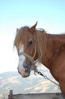 Regalos divertidos del amante del caballo