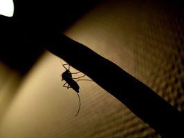 El Ciclo de Vida del Mosquito