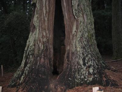 Los ecosistemas de California