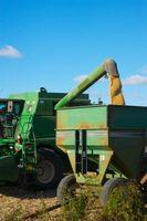 Variedades de grano de sorgo