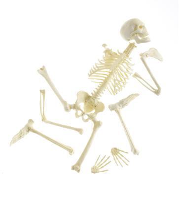 Componentes esqueleto axial