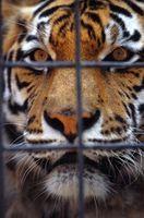 Lista de los mejores zoológicos de los Estados Unidos