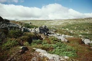 ¿Cómo es un bioma de la tundra importantes para el ecosistema?