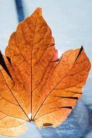 Cómo hacer un ramo de novia con hojas de otoño