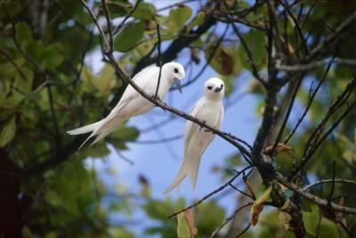 Lo que sí tienen rasgos pájaros?