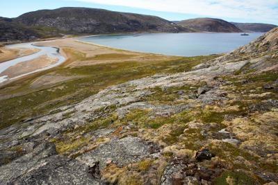 ¿Qué tipo de insectos viven en la tundra?