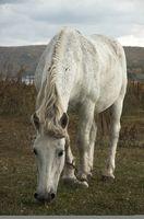 Regalos para jóvenes amantes del caballo