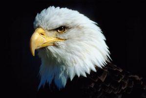 Lista de Aves del Estado de Washington