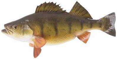 La información histórica en los pescados de la perca
