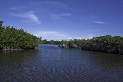 Cómo identificar los peces marinos del sur de la Florida