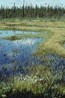 Tipos de Humedales de los pantanos
