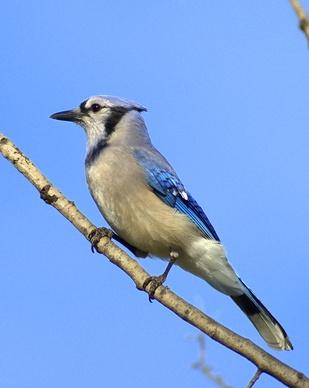 La identificación de aves silvestres