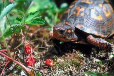 Las diferentes variedades de tortugas