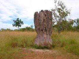 ¿Cómo se comunican las termitas?