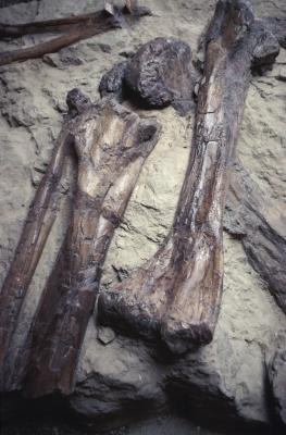 Lista de fósiles Megafauna australiana