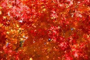 Las razones científicas para las hojas de por qué el cambio de color en el otoño