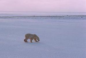 Los efectos del calentamiento global sobre la fauna salvaje