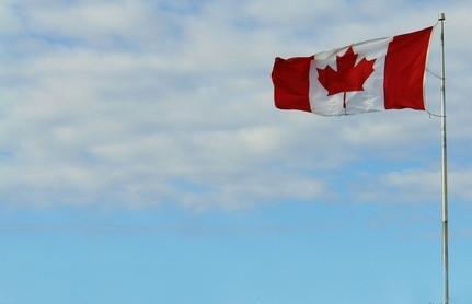 Los árboles de arce rojo en Canadá